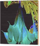 Angel's Trumpet Flower Wood Print
