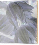Angels Wings Wood Print