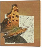 Anglewing Butterfly Wood Print