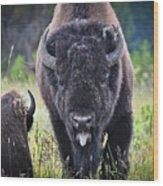 Angry Bison Wood Print