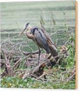 Angry Heron Wood Print