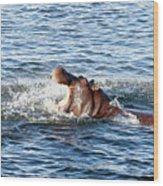Angry Hippo Wood Print