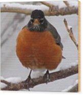 Angry Robin Wood Print