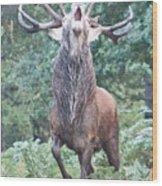 Angry Stag Wood Print
