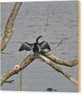 Anhinga And Alligator Wood Print