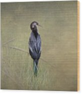 Anhinga By Darrell Hutto Wood Print