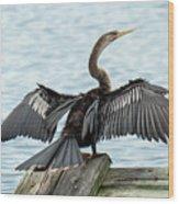 Anhinga Drying Its Wings Wood Print