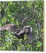 Anhinga In The Sun Wood Print