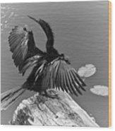 Anhinga On Lake Wood Print