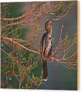 Anhinga Sunset Wood Print