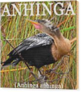 Anhinga The Swimming Bird Wood Print