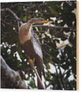 Anhinga Water Fowl Wood Print