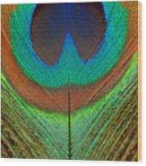 Animal - Bird - Peacock Feather Wood Print