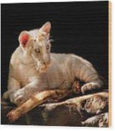 Animal - Cat - A Baby Snow Tiger Wood Print