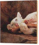 Animal - Cat - My Chew Toy Wood Print