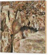 Animal - Squirrel - The Squirrel Wood Print