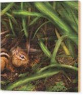 Animal - Wild - Cute Little Chipmunk  Wood Print