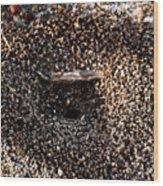 Animal Homes Ants Maybe Wood Print