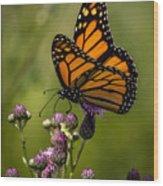 Animal Life 5189 Wood Print