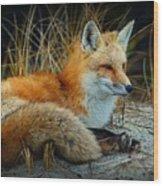 Animal - The Alert Fox  Wood Print