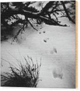 Animal Tracks Wood Print