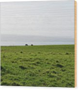 Animals Grazing In A Field Along The Cliffs Of Moher Wood Print