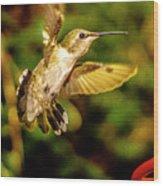 Anna Hummingbird  In Flight 1 Wood Print