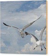 Anna Maria Laughing Gulls Wood Print