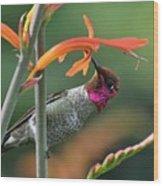 Anna's Hummingbird 1 Wood Print