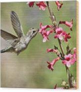Anna's Hummingbird And The Penstemon  Wood Print