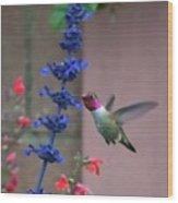 Anna's Hummingbird Feasting At Blue Salvia Wood Print