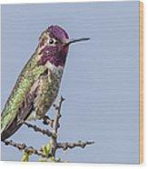 Anna's Hummingbird Perched Wood Print