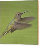 Anna's Hummingbird, Sacramento County California Wood Print