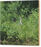 Annoyed - Heron and Red Winged Blackbird 5 of 10 Wood Print