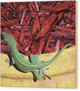 Anole Getting A Better Look Wood Print