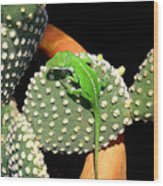 Anole Hanging Out With Cactus Wood Print by Lucyna A M Green