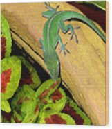 Anole Having A Drink Wood Print