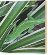Anole Hiding In Spider Plant Wood Print by Lucyna A M Green