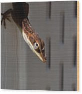 Anole Wood Print