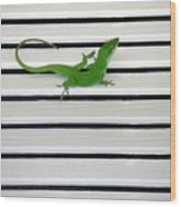 Anole Shuttered Out Wood Print
