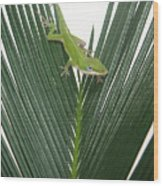 Anole With Palm - Assertive Wood Print