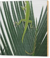 Anole With Palm - Cautious Wood Print