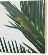 Anole With Palm - Coy Wood Print
