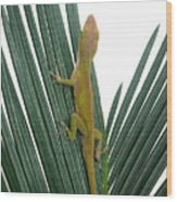 Anole With Palm - Curious Wood Print