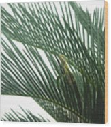 Anole With Palm - Entangled Wood Print