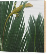 Anole With Palm - Flexible Wood Print
