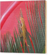 Anole With Palm - In The Red Wood Print