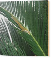 Anole With Palm - Inquisitive Wood Print
