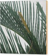 Anole With Palm - Looking Up Wood Print