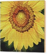 Another Artistic Sunflower Wood Print